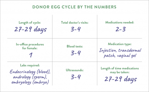 Donor egg cycle by the numbers